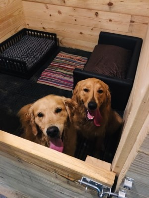 dogs in our doggie hotel